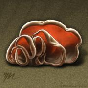 Series Drawings Metal Prints - Wood Ear Mushrooms Metal Print by Marshall Robinson
