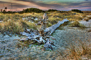 Drift Wood Framed Prints - Wood Framed Print by Joetta West