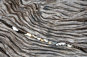 Grapevine Metal Prints - Wood Railroad Tie Pebbles Metal Print by David Kozlowski