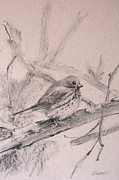Bird Pastels - Wood Sparrow by Barbara Richert