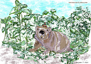 Woodchuck Chuck Print by Susie Morrison