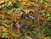 Woodcock Painting Originals - Woodcock Mating Season by David Keene