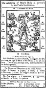 Human Body Parts Posters - Woodcut, 1750 Poster by Science Source