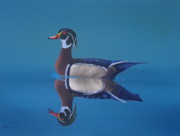 Waterfowl Paintings - Woodduck by Michael Allen