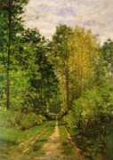 Woods; Shadows; Trees Paintings - Wooded Path by Claude Monet