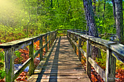 Stephen Younts - Wooded Walkway