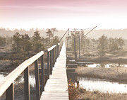 Marsh Path Framed Prints - Wooden Boardwalk over Marsh Framed Print by Jaak Nilson