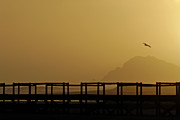 Flying Seagull Art - Wooden Bridge and Ocean at sunset by Sami Sarkis