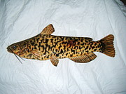 Catfish Mixed Media - Wooden brown Bullhead Catfish number one by Lisa Ruggiero