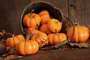 Harvest Photos - Wooden bucket filled with tiny pumpkins by Sandra Cunningham