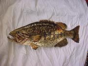 Largemouth Bass Reliefs - Wooden Large Mouth Bass Number Five by Lisa Ruggiero