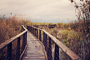 Railing Prints - Wooden Path On The Lake Print by Copyright Anna Nemoy(Xaomena)