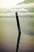 Water Bird Photos - Wooden Pile by Joana Kruse