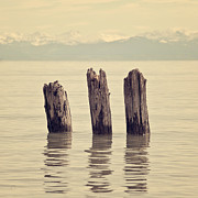 Mountain View Photos - Wooden Piles by Joana Kruse