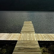 Tree Photos - Wooden pontoon by Bernard Jaubert