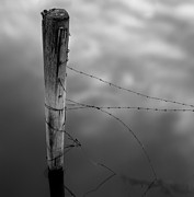 Standing Water Framed Prints - Wooden Post With Barbed Wire Framed Print by Peter Levi