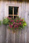 Shed Photo Posters - Wooden Shed With A Flower Box Under The Poster by Michael Interisano