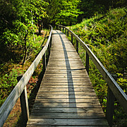 Railing Photo Prints - Wooden walkway through forest Print by Elena Elisseeva