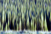 Pine Trees Metal Prints - Woodland Abstract Metal Print by The Forests Edge Photography - Diane Sandoval
