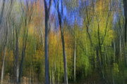 Impression Photos - Woodland Blaze by John Nandor