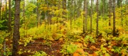Forest Floor Photo Framed Prints - Woodland Panorama Framed Print by Michael Peychich