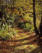 The Pathway Photos - Woodland Path, Mount Stewart, Ards by The Irish Image Collection