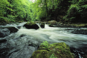 Woodland Scenes Posters - Woodland Stream And Rapids, Time Poster by Norbert Rosing