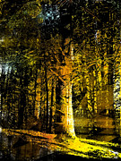 Woods; Shadows; Trees Paintings - Woodland Tapestry by Paul Sachtleben