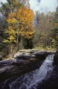Woodland Scenes Posters - Woodland View And Falls In Autumn Poster by Medford Taylor