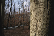 Writings Posters - Woodland View With Graffiti On Tree Poster by Brian Gordon Green