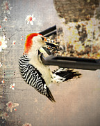 Bird-feeder Prints - Woodpecker Print by Kathy Jennings