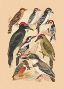 Eftalou Art - Woodpeckers and Others by Eric Kempson
