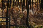 Fall Grass Prints - Woods - 2 Print by Linda Knorr Shafer