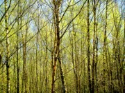 Nature Acrylic Prints - Woods 2 by Roberto Alamino