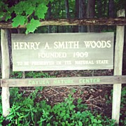 Signage Photos - #woods #forest #nature #sign #signage by Jenna Luehrsen