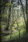 Ravine Prints - Woods Print by Scott Norris