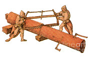 Two Handed Posters - Woodworkers, Two-man Crosscut Saw Poster by Photo Researchers