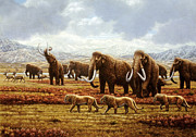 Tusks Framed Prints - Woolly Mammoths Framed Print by Mauricio Anton