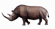 One Horned Rhino Prints - Woolly Rhinoceros, Artwork Print by Mauricio Anton