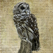 Barred Owl Digital Art Framed Prints - Words and Wisdom Framed Print by Michelle Arrington