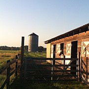 Animals Art - #work#barn#horses#horse #silo by Melissa Hoover