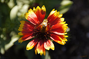 Mick Anderson - Worker Bee Working