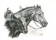 Cow Drawings Framed Prints - Working Cowhorse Framed Print by Jana Goode