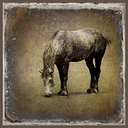 Textured Horse Art Framed Prints - Working Horse Framed Print by Sari Sauls