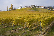 Vineyards Photos - World Heritage Vineyards by Sophie De Roumanie