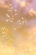 Jenny Rainbow - World of Tenderness. Glowing Light.