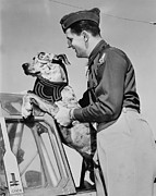 Great Dane Dog Portraits Photo Acrylic Prints - World War Ii, Tiger, A Six-month Old Acrylic Print by Everett