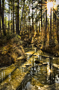 Refection Prints - World without People Print by Heather Applegate