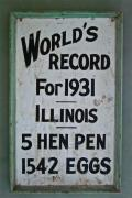 Hen Prints - Worlds Record Print by Gwyn Newcombe