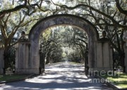 Oak Trees Framed Prints - Wormsloe Plantation Gate Framed Print by Carol Groenen